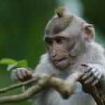 12677-monkey-forest-bali