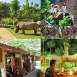 safari-marine-park