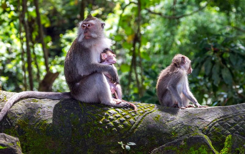 ubud-monkey-forest-bali3