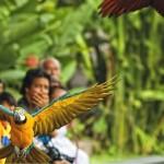 bali bird park lovebali (1)