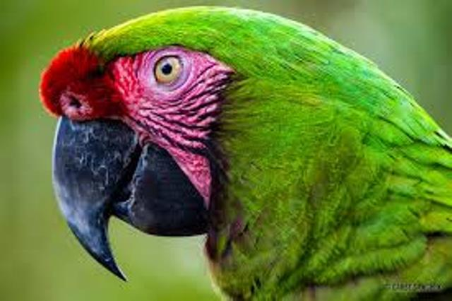bali bird park lovebali (10)