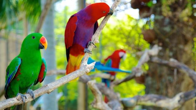 bali bird park lovebali (2)