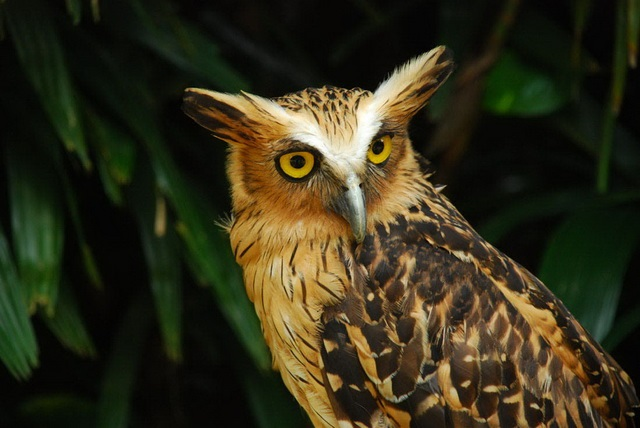 bali bird park lovebali (3)