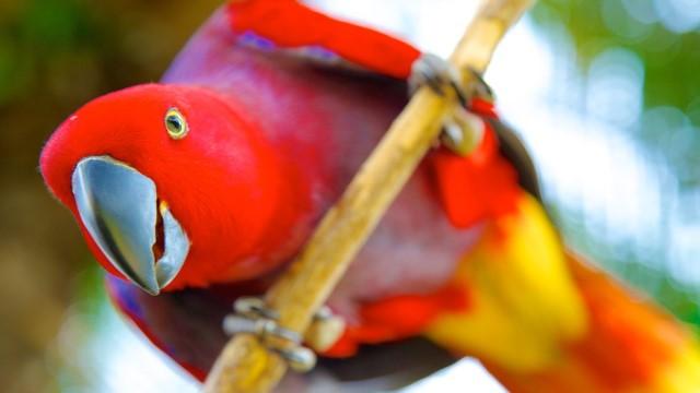 bali bird park lovebali (4)