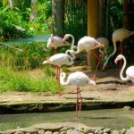 bali bird park lovebali (6)