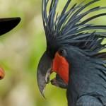 bali bird park lovebali (7)