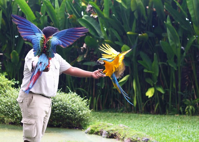 bali bird park lovebali (8)