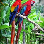 bali bird park lovebali (9)