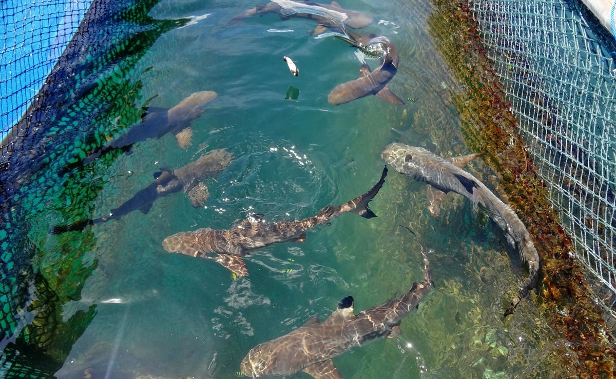 bali-sharks-island-denpasar-05