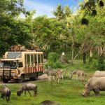 Safari Journey (1)
