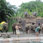 elephant-educational-show