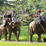 balielephantsafari
